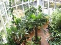 зимний сад из стекла