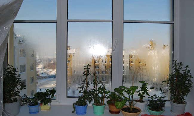 Фотография окна из профиля Рехау
